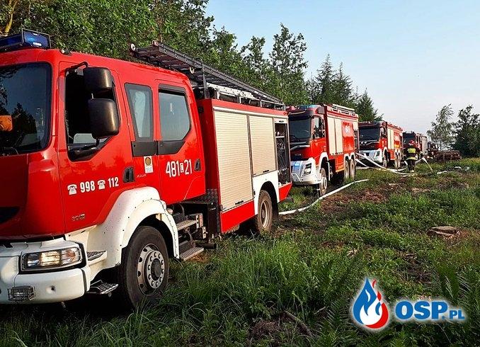 Pożar lasu - Procyń OSP Ochotnicza Straż Pożarna