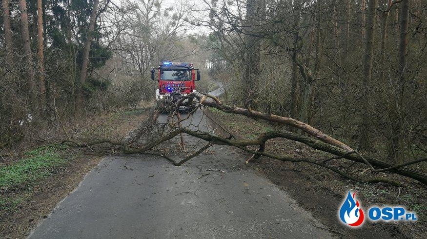 Drzewo zawisło nad drogą OSP Ochotnicza Straż Pożarna