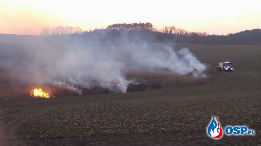 Pożar trzcinowiska OSP Ochotnicza Straż Pożarna