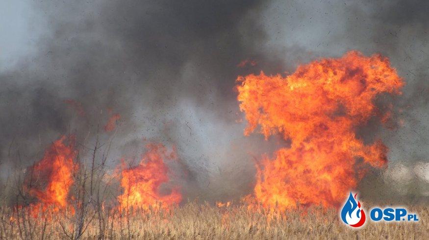 Pożar traw - Jędruszkowce OSP Ochotnicza Straż Pożarna