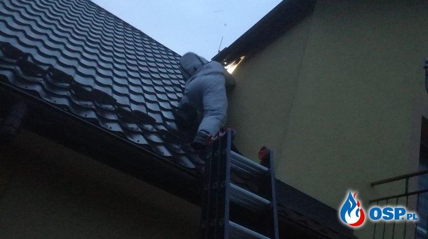 Usuwanie gniazda szerszeni - 20 sierpnia 2019r. OSP Ochotnicza Straż Pożarna