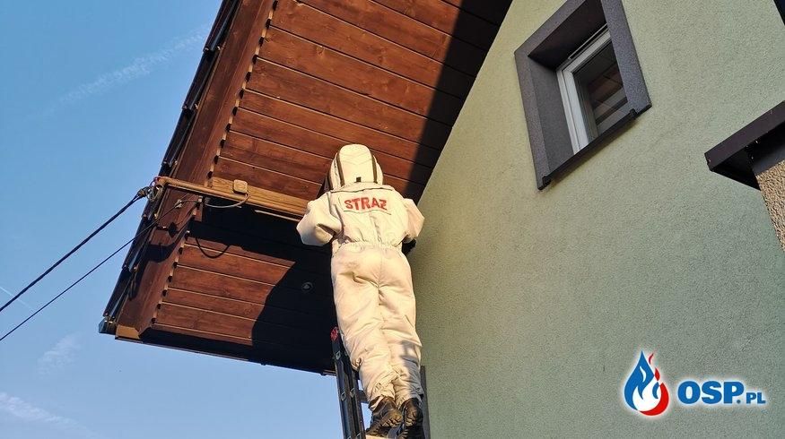 Usuwanie gniazda os - 11 września 2019r. OSP Ochotnicza Straż Pożarna