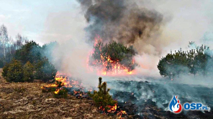 Duży pożar i wypadek OSP Ochotnicza Straż Pożarna