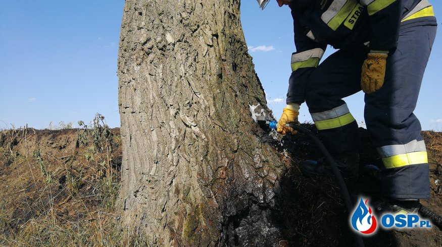 Pożar pojedyńczego drzewa OSP Ochotnicza Straż Pożarna
