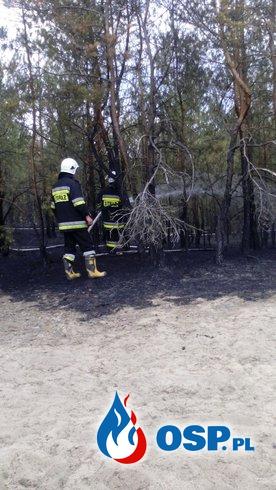 Pożar lasu w miejscowości Gapinin OSP Ochotnicza Straż Pożarna
