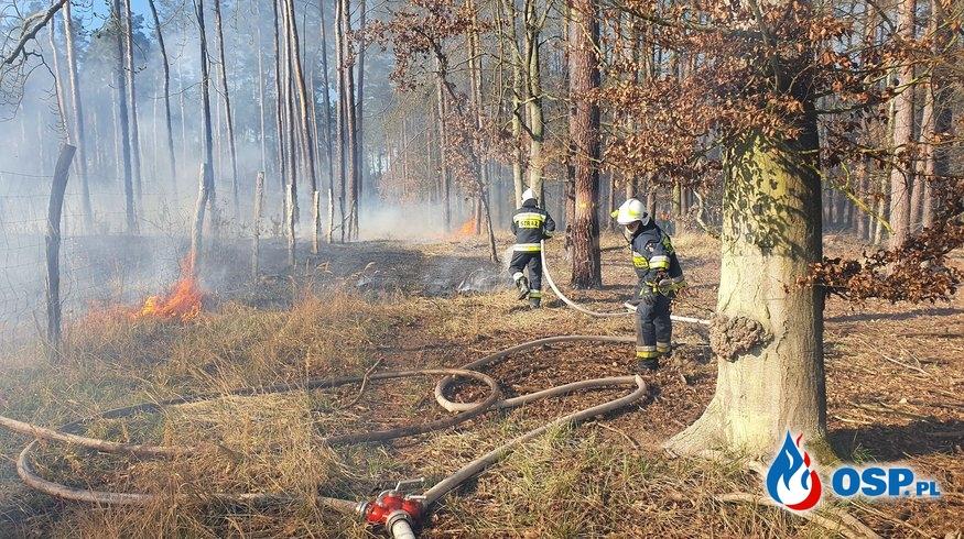 45/2020 Pożar poszycia i uprawy leśnej OSP Ochotnicza Straż Pożarna