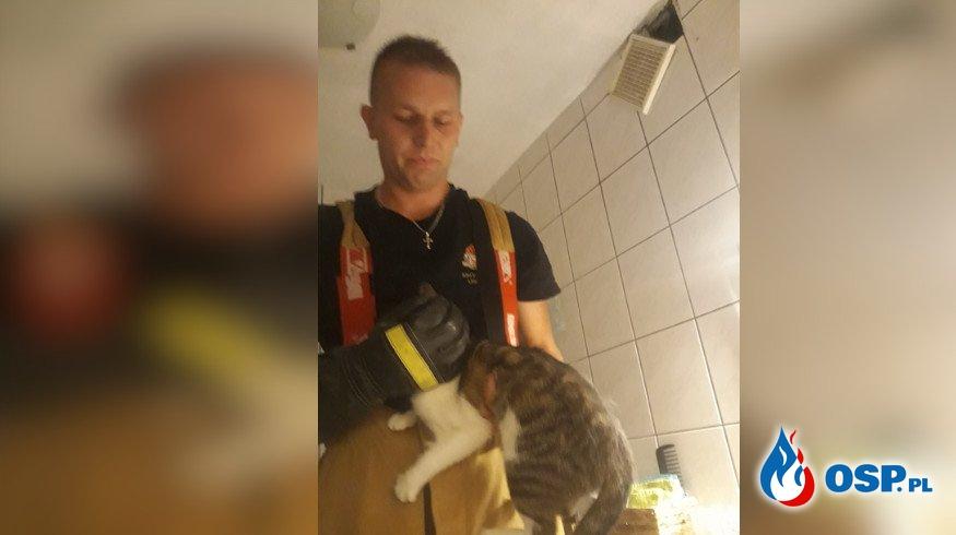 Nietypowa akcja konińskich strażaków. Wezwano ich do... kota. OSP Ochotnicza Straż Pożarna