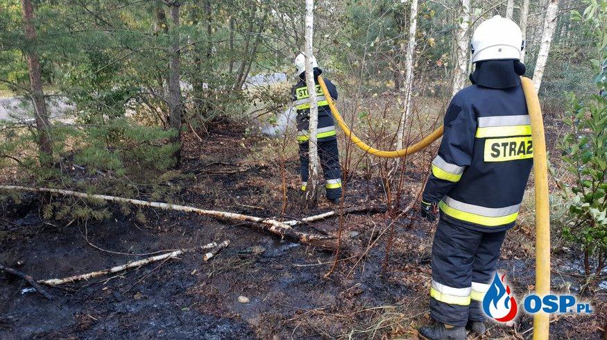 Pożar lasu Gucin OSP Ochotnicza Straż Pożarna