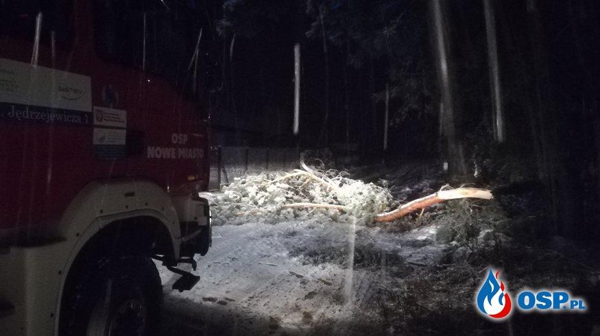 Połamane drzewo Nowe Miasto  OSP Ochotnicza Straż Pożarna