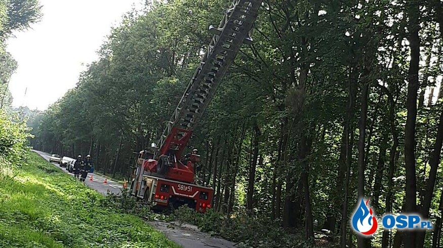 [32/2017] Złamane drzewo, Zwonowice ul. Sumińska OSP Ochotnicza Straż Pożarna