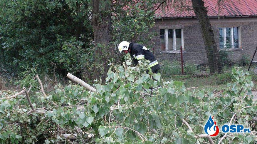 Zwisająca Gałąź! OSP Ochotnicza Straż Pożarna