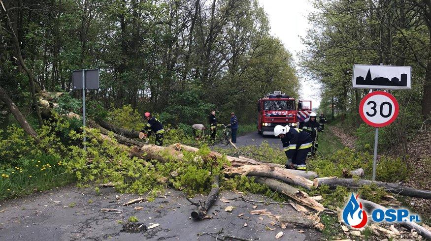 Powalone drzewo w Dobrzejowie OSP Ochotnicza Straż Pożarna