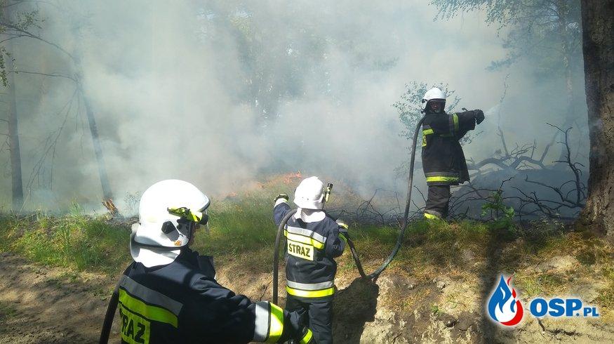 06.06 Pożar ściółki leśnej na dawnym poligonie w Czarnem. OSP Ochotnicza Straż Pożarna