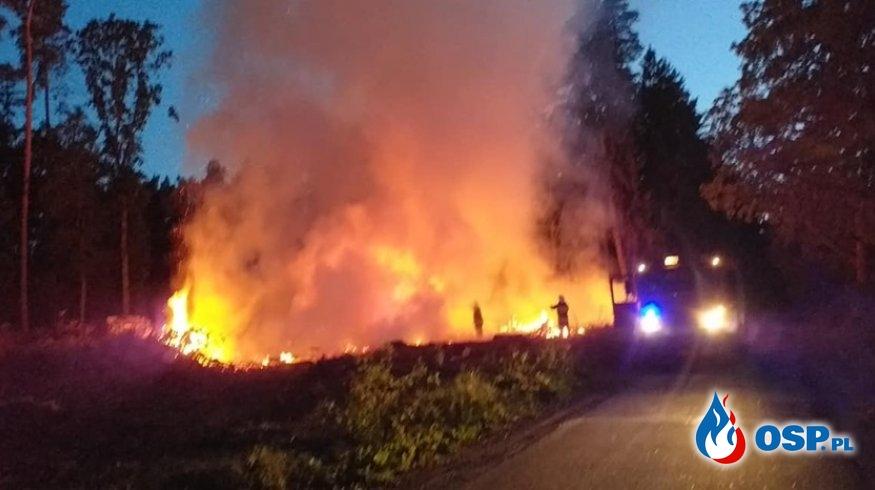 Nocny pożar lasu. OSP Ochotnicza Straż Pożarna
