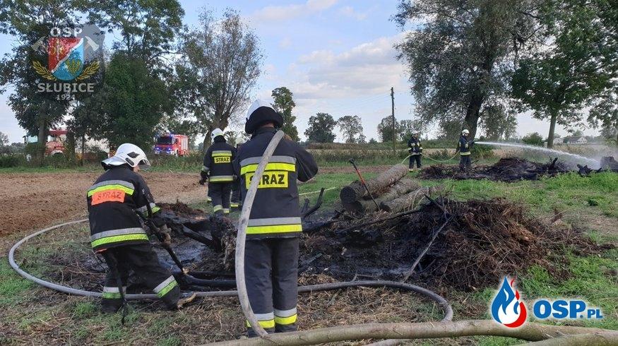 Pożar pozostałości roślinnych i drzew OSP Ochotnicza Straż Pożarna