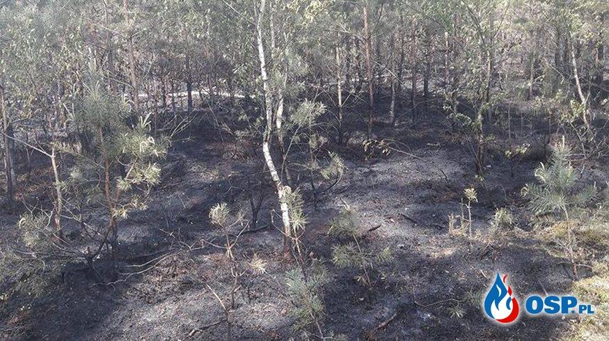 Jasionna – pożar lasu OSP Ochotnicza Straż Pożarna
