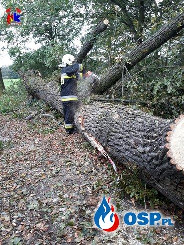 Usuwanie skutków orkanu OSP Ochotnicza Straż Pożarna