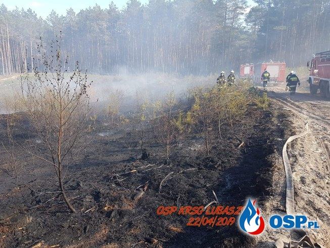 Pożar lasu na granicy dwóch powiatów OSP Ochotnicza Straż Pożarna
