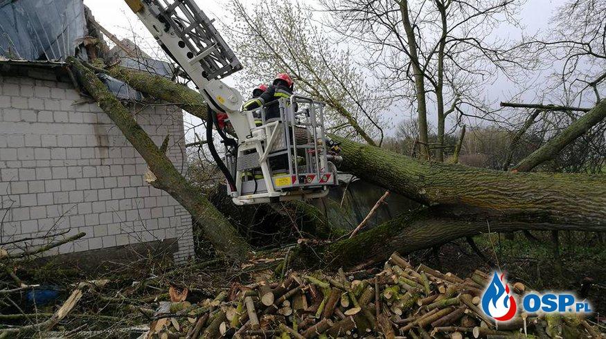 Powalone drzewo na stodołę OSP Ochotnicza Straż Pożarna