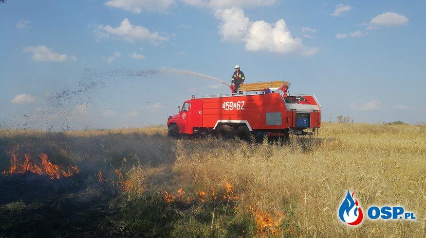 Pożar zboża i trawy OSP Ochotnicza Straż Pożarna
