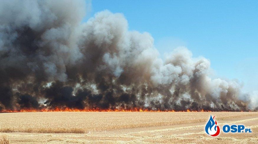 70 hektarów pól spłonęło w Wielkopolsce. Pożar gasiło 19 zastępów strażaków. OSP Ochotnicza Straż Pożarna