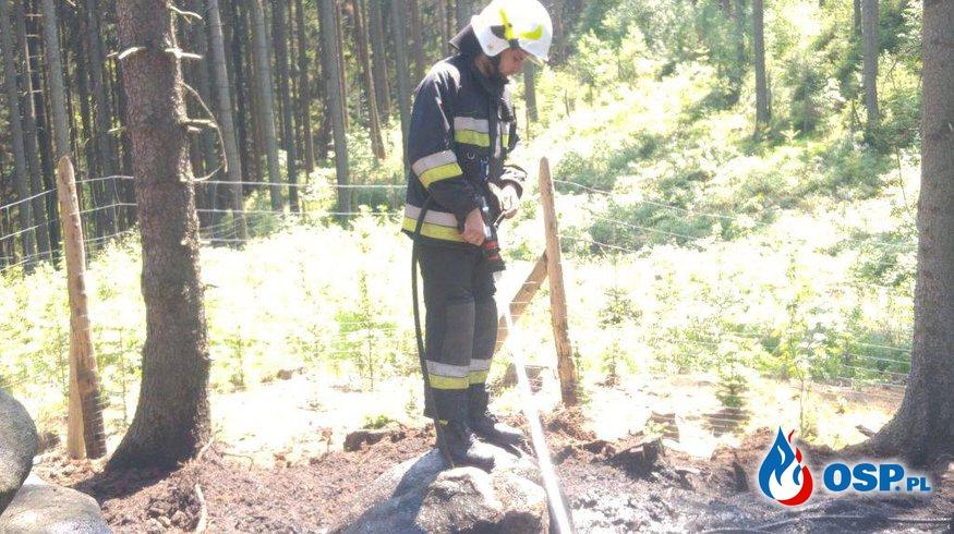 Pożar ściółki leśnej OSP Ochotnicza Straż Pożarna