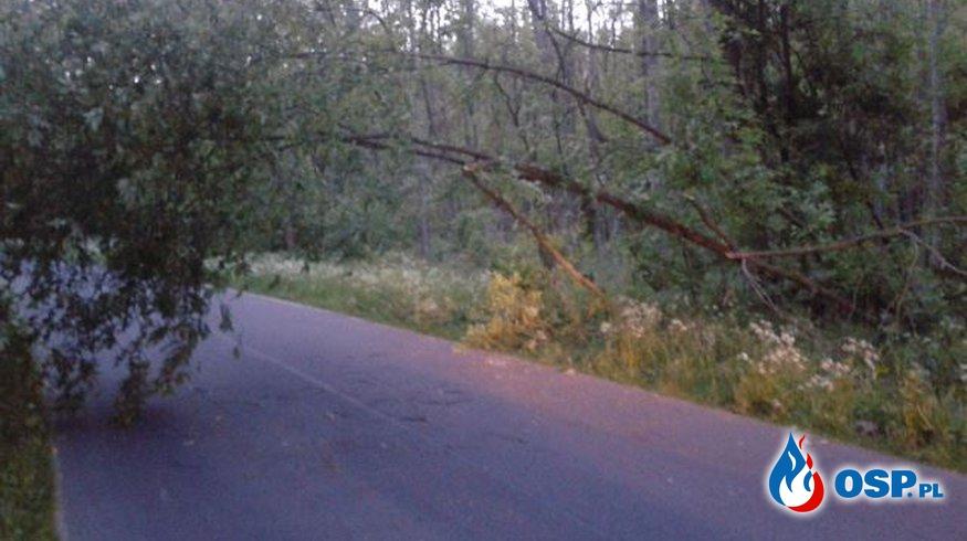 ALARM! Powalone drzewo zawisło nad drogą. OSP Ochotnicza Straż Pożarna